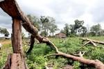Thủ tướng đã phát lệnh, hãy cứu lấy rừng Tây Nguyên