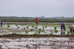 Mùng 4 Tết: Người nông dân bắt đầu xuống đồng
