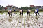 Người nông dân hối hả xuống đồng ngày đầu Xuân