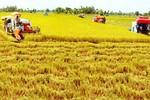 Bàn về giải pháp thúc đẩy tập trung đất đai