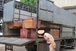Quảng Bình: Bắt liên tiếp 5 vụ vận chuyển gỗ lậu trong vòng hai tuần