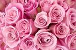 Ngày Phụ Nữ - Ngày của Yêu Thương