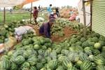 Nỗi gian truân của người nông dân và trách nhiệm của các Bộ trưởng