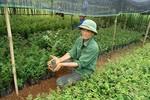 Hỗ trợ gạo cho đồng bào chăm sóc, bảo vệ rừng Sơn La