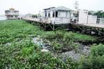Hồ Tây ô nhiễm do nước thải của thành phố, nhà thuyền vô can?