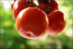 Ăn cà chua có thể giảm nguy cơ đột quỵ