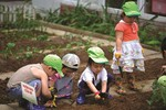 Đầu thế kỷ 20, giáo dục ở Châu Âu đã dạy học sinh làm vườn