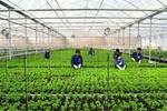 4 tiêu chí để được công nhận doanh nghiệp nông nghiệp ứng dụng công nghệ cao