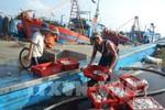 Vi phạm hành chính về lĩnh vực thức ăn chăn nuôi, thủy sản phạt đến 200 triệu