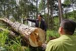 Yêu cầu Chủ tịch Lâm Đồng kiểm tra, làm rõ các vụ phá rừng trên địa bàn