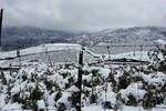 Người dân Sapa khổ vì tuyết