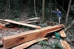 Xử lý nghiêm người đứng đầu không phát hiện hành vi phá rừng