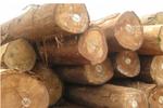 Một thương nhân Trung Quốc bị lừa 3,2 tỷ đồng khi mua gỗ