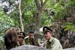 Đã bắt được con khỉ trên đỉnh Bàn Cờ