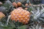 Ngọt ngào được mùa dứa chín