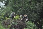 Vì sao đụng đến rừng Sơn Trà thì bị lên án?