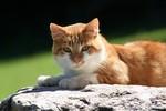 Thế vận hội mèo sẽ được tổ chức tại thành phố Tyumen của Nga