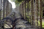 Nổ súng tại biên giới Ấn Độ - Pakistan, 2 lính Ấn Độ thiệt mạng