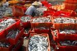 """TQ dùng vệ tinh đưa ngư dân ra khắp Biển Đông đánh cá đòi """"chủ quyền"""""""