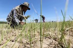 Việt Nam có thể học được gì từ chính sách nông nghiệp của Thái Lan?