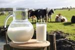 Vì học sinh, hay chỉ muốn bán thật nhiều sữa cho doanh nghiệp?