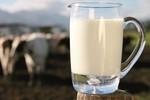Sữa tươi có đủ vi chất cần thiết, vì sao vẫn cần bổ sung?