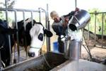 Vinamilk nên làm rõ nguồn cung sữa tươi nguyên liệu cho Sữa học đường