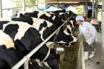 Bài thầu Sữa học đường Hà Nội hổng từ đầu, Sở Y tế kiểm tra giám sát cách nào?