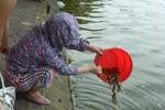 """Hà Nội: Một phụ nữ """"phóng sinh"""" nhiều chạch, ốc xuống hồ Gươm"""