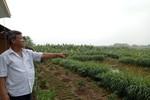 Thủ tướng yêu cầu kiểm tra việc lấy đất nông nghiệp làm dự án ở Vĩnh Phúc