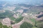 Để người dân phá rừng phòng hộ ở Đông Triều là do chủ rừng