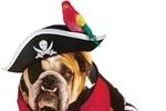 Halloween dành cho những chú chó