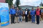 Công ty Sữa Cô Gái Hà Lan trao tặng 80 con bò cho nông dân nghèo tỉnh Lâm Đồng