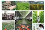 Phải thu hút doanh nghiệp đầu tư cho nông nghiệp