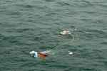 Điều tra nguyên nhân vụ va chạm giữa tàu cá Việt Nam và tàu Singapore