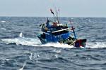 Lại thêm một vụ tàu container đâm tàu cá trên vùng biển Vũng Tàu