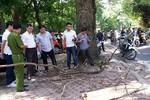 Bị cành cây rơi trúng đầu, một phụ nữ bị tử vong tại chỗ
