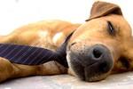 Một con chó tìm thấy kho đạn cũ của Nhật ở Sakhalin