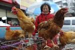 Công điện khẩn: Virus cúm H7N9 rất nguy hiểm, đã khiến 2 người tử vong