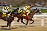 Kiến nghị cho phép cá cược bóng đá quốc tế, đua ngựa, đua chó