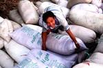 Giá lúa gạo tăng, ai hưởng lợi?