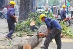 Sau vụ chặt hạ cây xanh, Thủ tướng yêu cầu Hà Nội làm gì?
