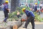 Vụ chặt hạ cây xanh: Đề nghị kiểm điểm trách nhiệm lãnh đạo Hà Nội