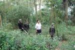 Chính phủ ban hành nhiều chính sách hỗ trợ đầu tư bảo vệ, phát triển rừng