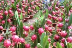 Ấn Độ chính thức bỏ lệnh cấm nhập khẩu 6 mặt hàng nông sản của Việt Nam
