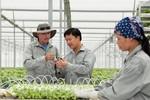 Ưu tiên hỗ trợ doanh nghiệp phát triển nông nghiệp