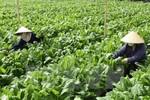 Bãi bỏ 11 văn bản quy phạm pháp luật lĩnh vực nông nghiệp