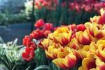 Tết này đến khu vườn ngắm hoa đẹp, độc, lạ nhất Việt Nam