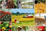 Hỗ trợ tới 90% phí bảo hiểm nông nghiệp cho hộ nghèo