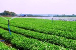 Chính sách khuyến khích phát triển nông nghiệp hữu cơ